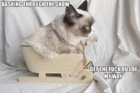 Grumpy Cat Snow Meme - dashing through the snow funnies pinterest