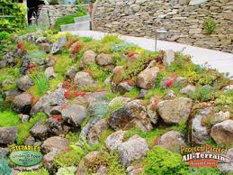 Rock Gardens On Slopes Stepables Plants That Tolerate Foot Traffic