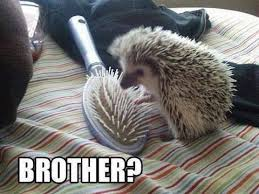 Hedgehog Meme - brother hedgehog memes and comics