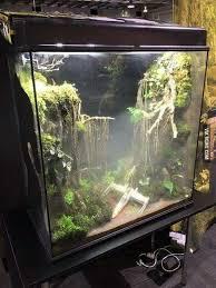 best 25 reptile terrarium ideas on pinterest reptile enclosure