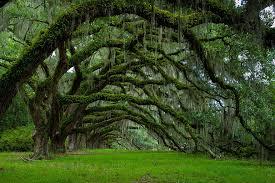 15 most majestically beautiful trees in the world seenox