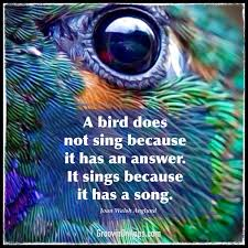 Inspirational Quotes Meme - don t silence your bird song app smashed meme groovin on apps