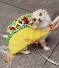 Cute Small Dog Halloween Costumes Halloween Pet Parade Animal Costumes Cute U0027re Scary Http