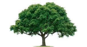 composite mildly wanked tree joke battles wikia fandom powered