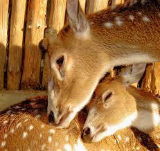 images?qtbnANd9GcStCYSWjgUvvf1rxRk8RLH CohntBO7iKe9p CBkB7dtKzNPK69 - Mother's Love in animals (Dabbang Muqaabla 3)