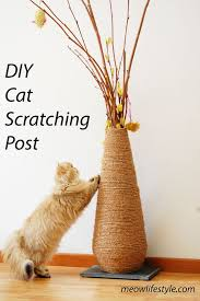 3 diy ideas for cats
