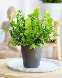 beautiful house plants 29 most beautiful houseplants you never knew about balcony garden web