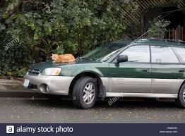subaru fest kenya cat on car stock photos u0026 cat on car stock images alamy