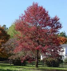 how to be successful with your ornamental tree landscaping