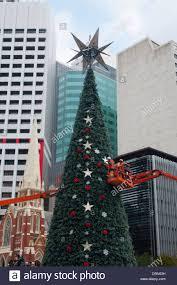 australian christmas tree stock photos u0026 australian christmas tree