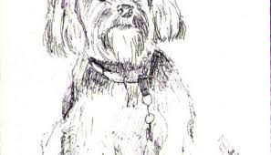 sketch of a dog called misaki in ballpoint pen one drawing daily