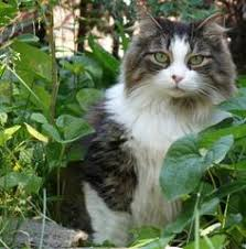 How To Keep Cats Out Of Your Backyard Keep Cats Out Of Your Garden Outdoor Cats Gardens And Cat