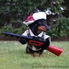 Halloween Costumes Miniature Dachshunds U0027mz Huntin U0027 Dog