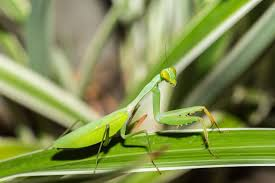 the most poisonous plants in australia hipages com au insects that are actually good for your home and garden hipages