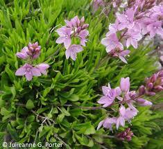gwenfar u0027s garden and other musings photo essay alpine plant centre