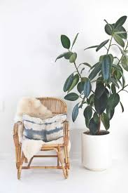 indoor house plants home décor with unusual indoor house plants housing news
