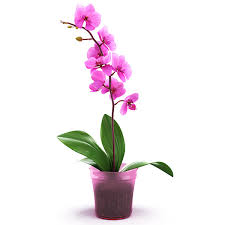 Flower Orchid 14 Most Beautiful Flowers In The World 2016 Roundpulse Round