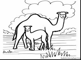 fantastic baby camel coloring page realistic with camel coloring