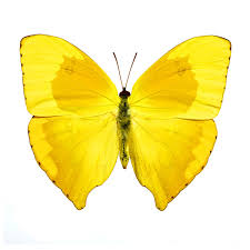 wallfloweronline decals home butterfly and