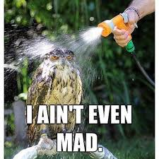 I Aint Even Mad Meme - new aint even mad meme owl i ain t even mad i ain t even mad know