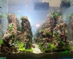 Planted Aquarium Aquascaping 242 Best Denenecek Projeler Images On Pinterest Aquarium Ideas