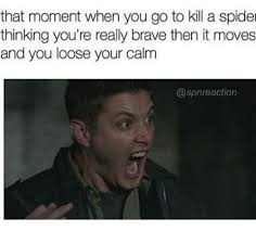 Kill Spider Meme - 25 best memes about kill a spider kill a spider memes