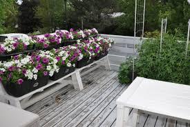 top arizona backyard landscaping ideas 2018 small backyard