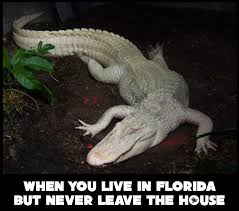 Alligator Memes - when you from florida but never leave the house meme florida