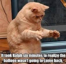 Funniest Cat Meme - 30 funny cat pictures with captions fallinpets