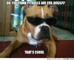Oh You Meme Generator - pittbull meme oh you think pitbulls are evil dogs meme
