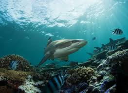 what is a phylum in marine life