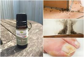 uses for tea tree that will change your