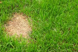 mole control in lawn and garden tips id