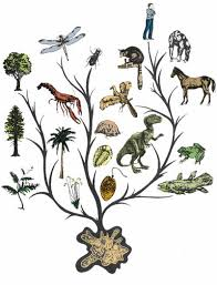 you don t to a ph d what about darwin s tree of