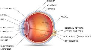 Anatomy Of The Eye Discover All About The Eye Its Anatomy Its Functioning