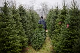 Places To Cut Down Your Own Christmas Tree This Season Wivb Com