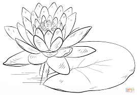 amazing free printable water lily flowers coloring pages printable