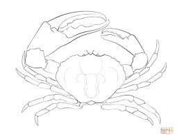 tasmanian giant crab coloring page free printable coloring pages