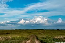 grassland native plants wah kon tah prairie el dorado springs missouri by betsey crawford jpg