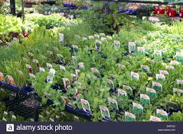 herbs for sale in small pots in a sydney garden centre stock photo