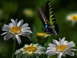 imagenes gif imagenes con movimiento 24 gifs lindas mariposas gifmaniacos es