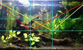 Aquascape Understanding The Golden Ratio In The Aquascape Aquascaper