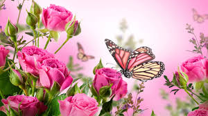 butterfly with flowers wallpapers al097b alhuda wallpaper