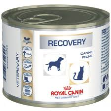 product categories royal canin vet diet feline pets central hong