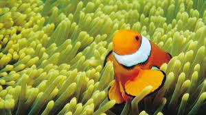 great barrier reef animals tourism australia