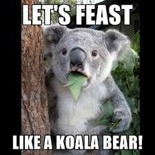 Koala Bear Meme - let s feast like a koala bear koala can t believe it meme