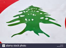 Old Lebanese Flag Cedar Tree Asia Stock Photos U0026 Cedar Tree Asia Stock Images Alamy