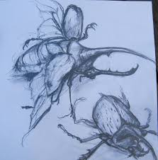 insects fiona campbell art page 4
