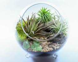 terrarium kit etsy