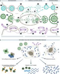 proteomics and integrative omic approaches for understanding host